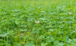 Big green meadow herb day. Big green meadow herb a day Stock Photos