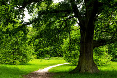 Big Green Oak Tree and Old Bench in the Park Stock Photo