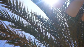 Big Green Palm tree branches against the blue sky. Close-up stock video footage