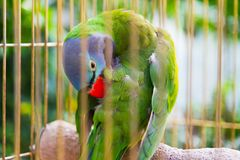 Big parrot in the cage in zoo royalty free stock photos