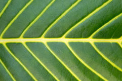 Big green plant leaf macro Stock Photos