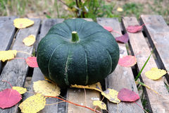 Big green pumpkin and fall leaves royalty free stock images