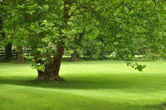 Big Green Tree Stock Image