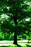 Big green tree Royalty Free Stock Photo