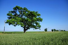 Big Green Tree Stock Photo