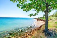 Big green tree on the beach Stock Photography