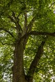 Big green tree. On the field royalty free stock photography