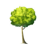 Big Green Tree Stock Images