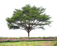 Big green tree and flower fields isolated. On white background Stock Photography