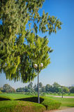 Big green tree and lamppost in the park Stock Images