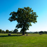 Big green tree. Photo for you Royalty Free Stock Photos