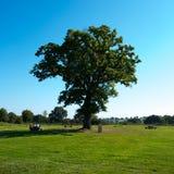 Big green tree Royalty Free Stock Photos