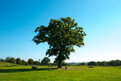 Big green tree Stock Image
