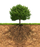 Big green tree with roots beneath. Big green tree with roots in soil beneath growth concept vector illustration