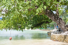 Big green tree by seaside Stock Images