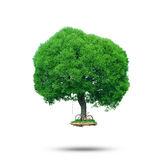 Big green tree. With a small glade and bike Royalty Free Stock Image