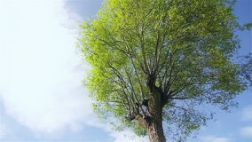 A big green tree in a sunny day. In China stock video footage