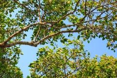 Big green tree Stock Photos