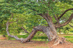 Big green tree and wetlands Stock Photography
