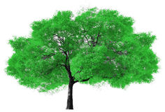 Big Green Tree on White Background. Big green tree isolated on white background Royalty Free Stock Photo