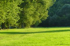 Big green trees. On green grass royalty free stock photo