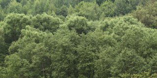 Big green trees. Green mixed forest trees in the middle lane Royalty Free Stock Photos