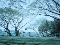 Big green trees in park. Big green trees in park in the morning stock image