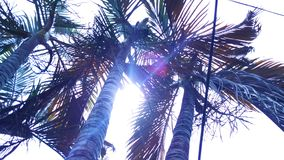 Big green tropical palm leaves exotic. royalty free stock images