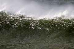 Big green wave Stock Images