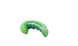 Big green worm Royalty Free Stock Photography