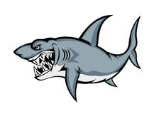 Big grey shark Stock Images