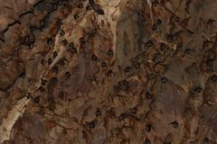 Big group of bats in the cave royalty free stock photography