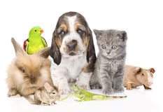 Big group of cute pets. Isolated on white background stock image