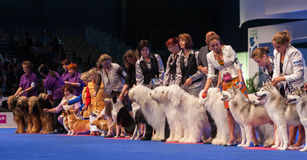 Big group of dogs at dog show Royalty Free Stock Images