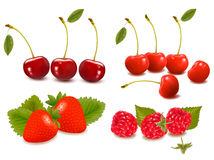 Big group of fresh berries  Vector Royalty Free Stock Photo