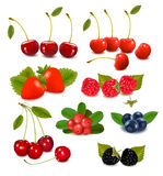 Big group of fresh berries  Vector Royalty Free Stock Photos