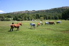 Big group of horses Stock Photos