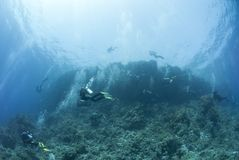 Big group of scuba divers underwater. Royalty Free Stock Images