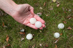 Big Hail after hailstorm. Big Hail after summer storm Royalty Free Stock Photo
