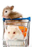 Big hamster is making shopping with little hamster. Isolated on white royalty free stock photos