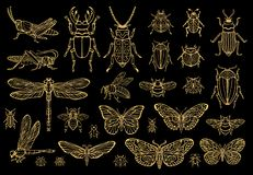 Free Big Hand Drawn Golden Line Set Of Insects Bugs, Beetles, Honey Bees, Butterfly, Moth, Bumblebee, Wasp, Dragonfly, Grasshopper. Royalty Free Stock Images - 134407319