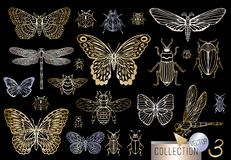 Free Big Hand Drawn Golden Line Set Of Insects Bugs, Beetles, Honey Bees, Butterfly, Moth, Bumblebee, Wasp, Dragonfly, Grasshopper. Stock Image - 134407321