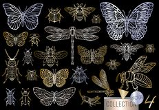Free Big Hand Drawn Golden Line Set Of Insects Bugs, Beetles, Honey Bees, Butterfly, Moth, Bumblebee, Wasp, Dragonfly, Grasshopper. Stock Image - 134407381