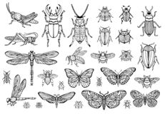 Free Big Hand Drawn Line Set Of Insects Bugs, Beetles, Honey Bees, Butterfly Moth, Bumblebee, Wasp, Dragonfly, Grasshopper. Stock Image - 134223801