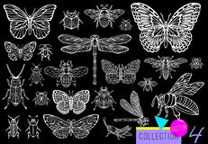 Free Big Hand Drawn Line Set Of Insects Bugs, Beetles, Honey Bees, Butterfly Moth, Bumblebee, Wasp, Dragonfly, Grasshopper. Stock Photography - 134223812