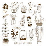 Big hand drawn set of house plants Royalty Free Stock Photography