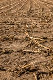 Big harvested corn field with brown soil royalty free stock photos