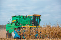 Big harvester in the field on a sunny day mowing ripe, dry corn. Stock Image