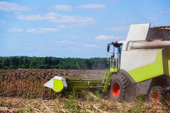 Big harvester in the field on a sunny day mowing ripe, dry sunflower. Royalty Free Stock Image