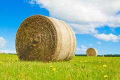 Big hay bale roll in a lush field Royalty Free Stock Photos